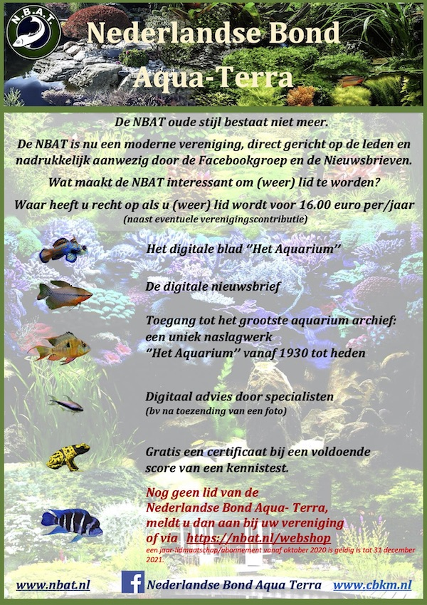NBAT advertentie